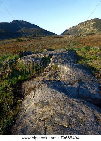 Grassland Vista