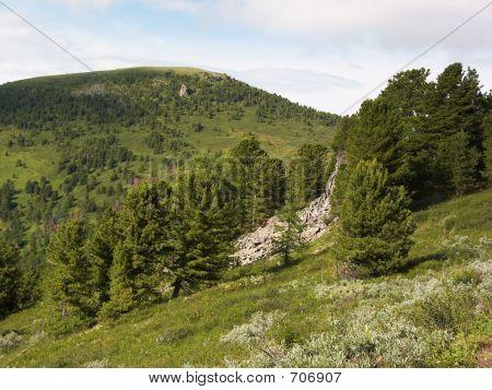 Stony forest