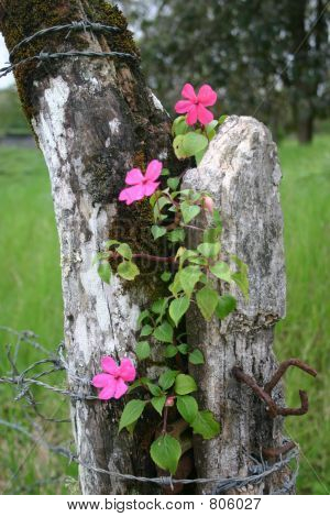 Flowers on Fence Post
