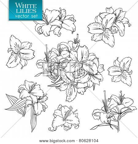 Outline drawings of white lilies. Set of flowers and bouquets
