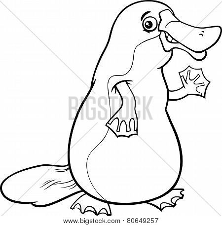 Platypus Animal Cartoon Coloring Page