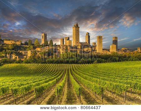 Vineyard covered hills of Tuscany,Italy