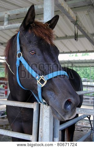 Portrait of a Retired Race Horse