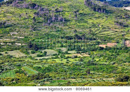 Mediterranean Rural Landscape