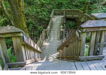 Walkway Through The Forest
