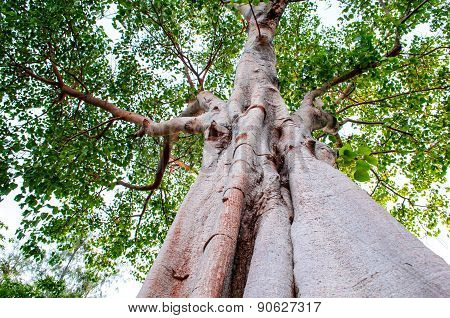 Tree Trunk And Foliage