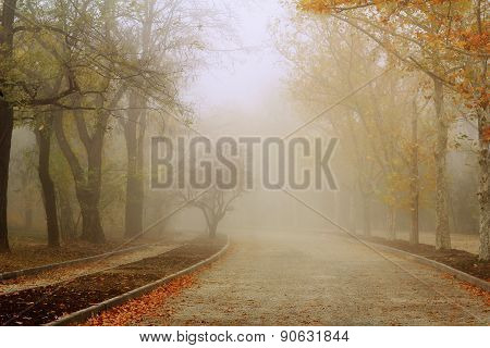 Road in autumn colours