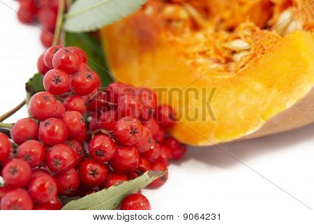 Cluster Of Wild Ash On A Background A Pumpkin
