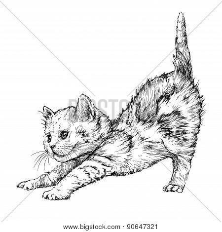 Kitten plaing. Hand drawn illustration
