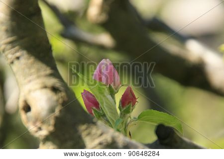 Flowers and buds on a branch
