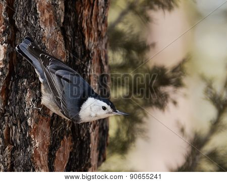 Bird On A Tree Trunk