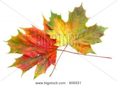 Colors Of Autumn 9