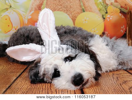 Sweet Puppy With Easter Bunny Ears