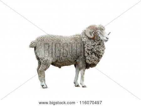 Ram Isolated