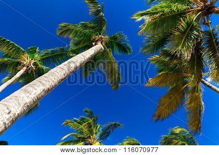 Palm tree on a beautiful day