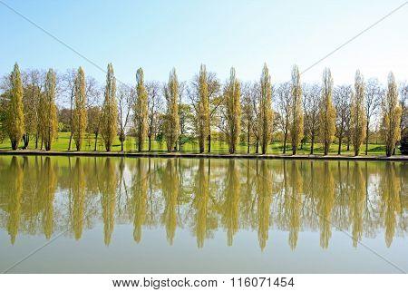 row of poplars, a visurow of poplars, a visual echo of the water.al echo of the water.
