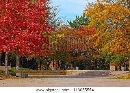 Colorful deciduous trees in park near Tidal Basin on sunny fall morning.