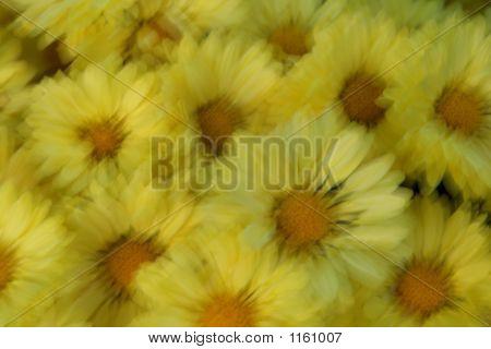Flower Haze...