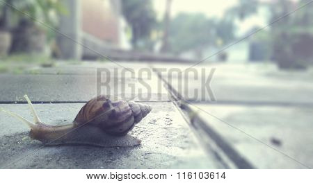 Snail Crawl Street Slowness Move Concept