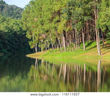Scenic view of pine tree with lake. Pang Oung a serene lake in a valley with surrounded by mountain ranges in Mae Hong Son Thailand poster