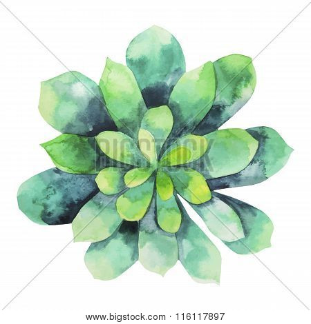 Watercolor green succulent