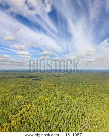 Unlimited Forests, View From Above