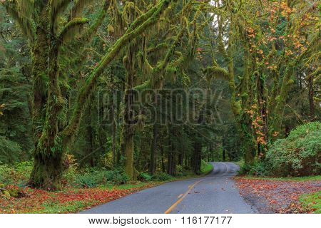 Road at Hoh Rainforest