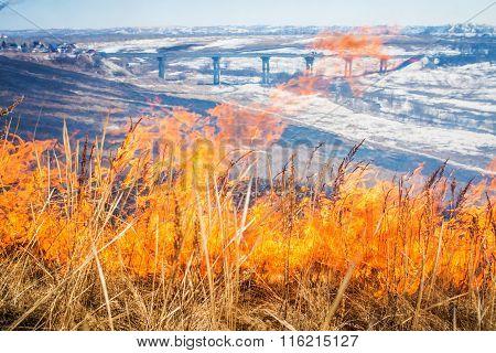 Wild grass on fire