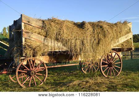 Rack full of loose hay.