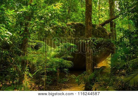 Rock Near Mossman Gorge