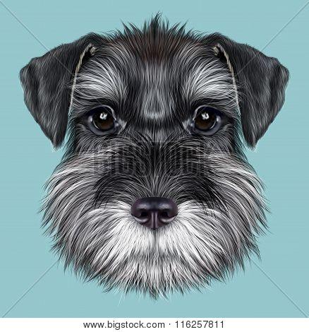 Schnauzer Dog Portrait