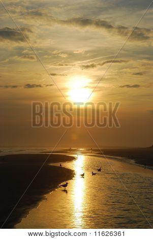 Golden Skies Sunset
