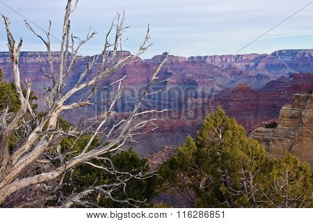 Trees over the Canyon
