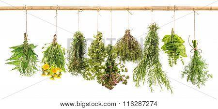 Fresh Herbs Dill, Basil, Rosemary, Thyme, Oregano, Marjoram, Dandelion