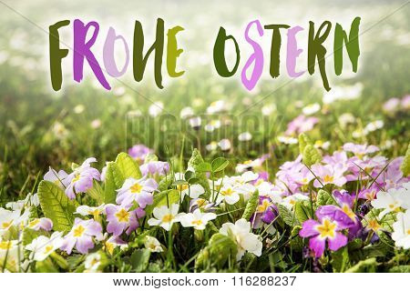 Flower Meadow With German Words Frohe Ostern