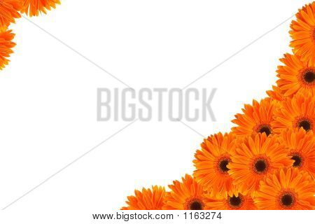 Orange Daisy Frame