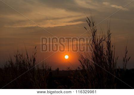 Silhouette Sunset Of  Grass Flower