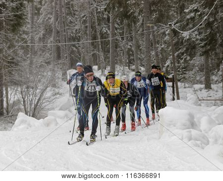STOCKHOLM - JAN 24 2016: Group of cross country skiing men in the beautiful spruce forest at the Stockholm Ski Marathon event January 24 2016 in Stockholm Sweden