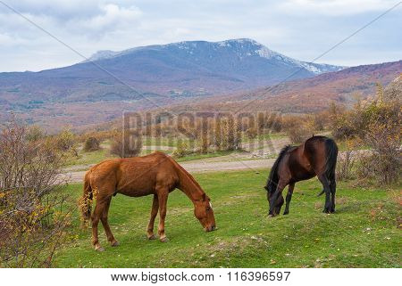 horses grazing in autumnal mountains