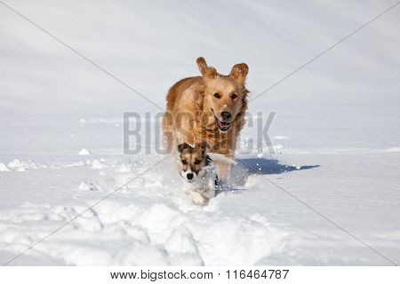 Two Gods Play In The Snow