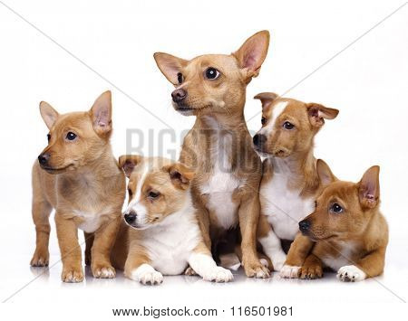 mother dog and her puppies, a bitch and litter