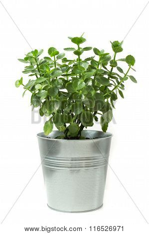 bush tree stainless flowerpot. Isolated on white