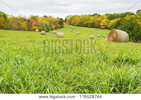 Fall Time Hay Field