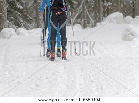 Rear View Of The Legs Of A Group Of Cross Country Skiing Men In The Beautiful Spruce Forest