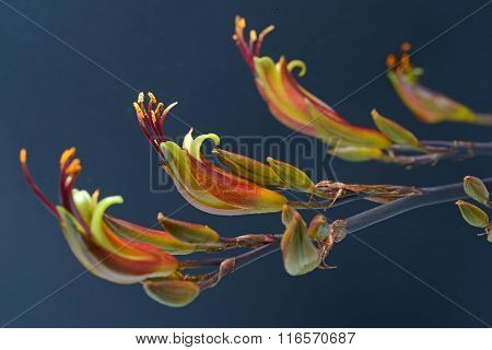 Flax Flowers against a black background