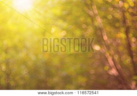 Nature Autumn Leaf With Bokeh Abstract Background.