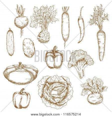 Sketch of healthy organic vegetables icons