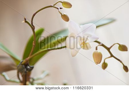 Beautiful fresh white orchid on wooden table