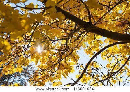 Sun Shines Through Autumn Deciduous