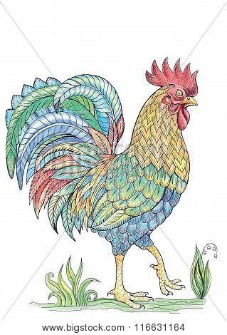 Coloring Cock, Rooster